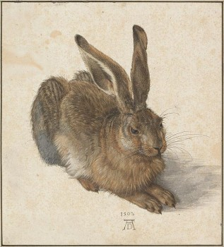 Albrecht Durer Young Hare