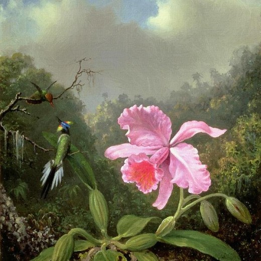Orchid And Hummingbirds