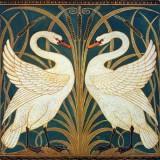 Swan Rush And Iris