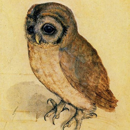 the-little-owl-albrecht-durer