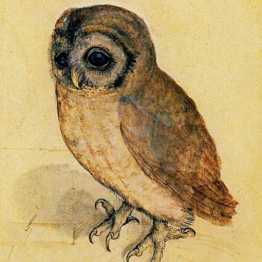 the-little-owl-albrecht-durer